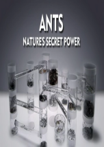 Ants: Secret Power of the Nature