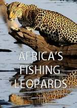Africa Fishing Leopards