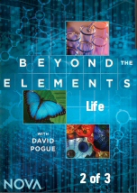 Beyond the Elements: Life