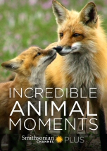 Incredible Animal Moments