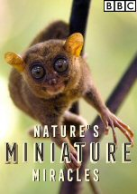Nature Miniature Miracles