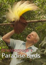 Attenboroughs Paradise Birds