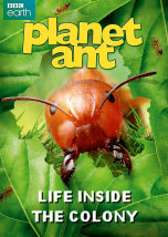 Planet Ant Life inside the Colony