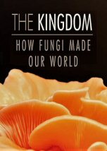 The Kingdom How Fungi Made Our World