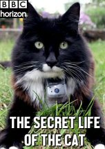 The Secret Life of the Cat