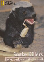 Snake Killers Honey Badgers of The Kalahari
